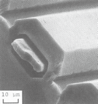 Silicon Resonant Sensor